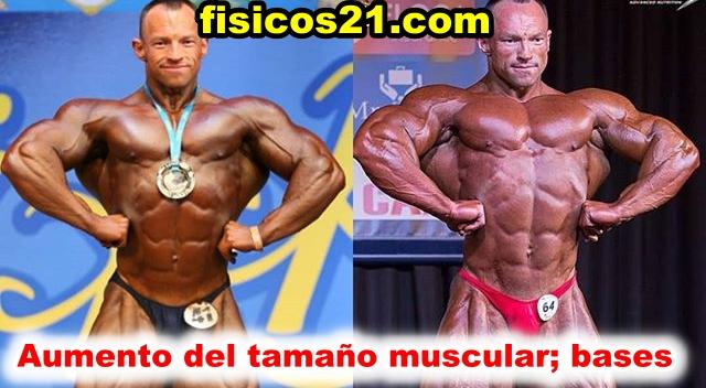 Aumento del tamaño muscular;  bases